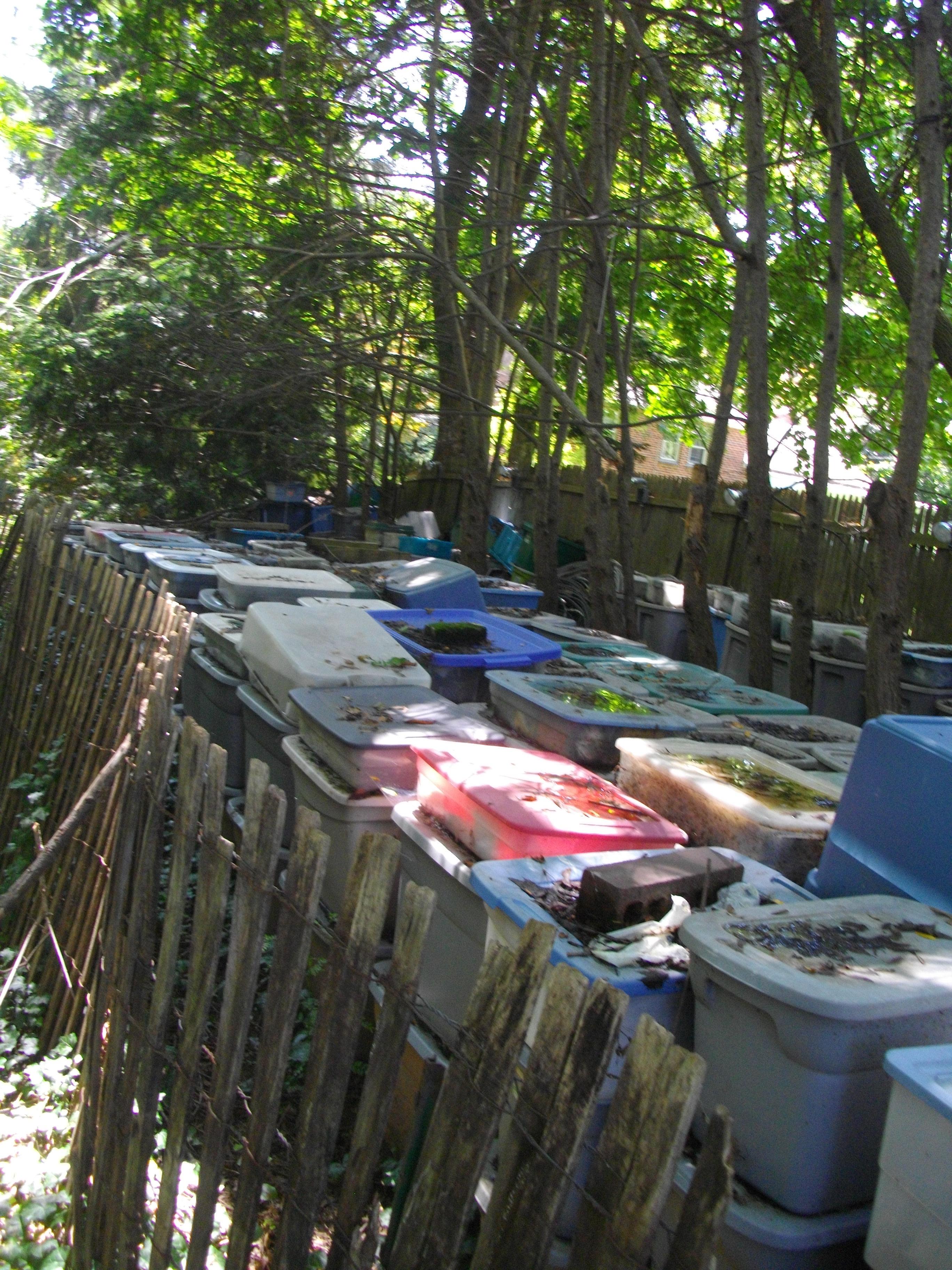 Backyard Bins discovering 800 hoarded backyard bins | brick house 319